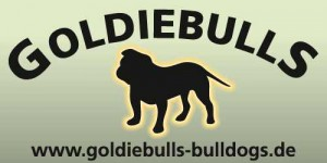 Goldiebulls_banner_2__2_